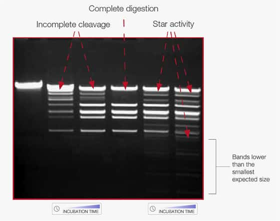 electrophoresis gel image showing distinction of incomplete digestion and star activity
