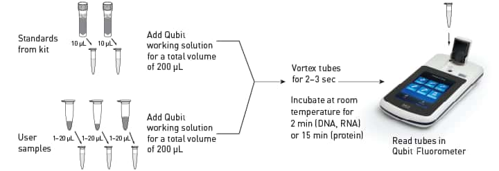 Illustration of the Qubit® quantitation assay workflow