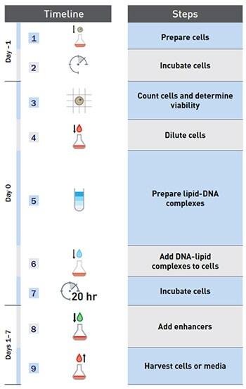expi293 u2122 expression system for structural biology