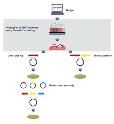 GeneArt Strings DNA Fragments & Libraries | Thermo Fisher Scientific