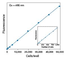 CyQUANT® Cell Proliferation Assay Kit