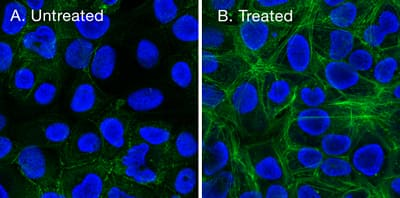 Stained cell images, with and without optimized fixation