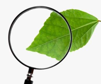 photograph showing a leaf, with a portion magnified using a magnifying glass