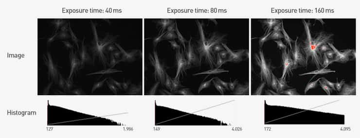 Series of three images from a fluorescence imaging experiment showing how pixel saturation increases with exposure time increases.