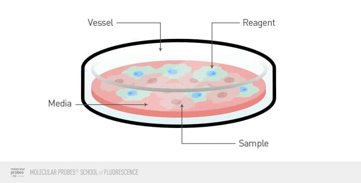 diagram of a cell culture dish with the vessel, reagent, media, and sample labeled
