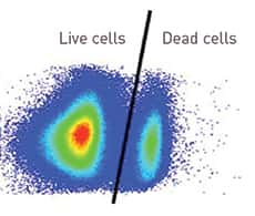 section of flow cytometry scatter plot showing both live and dead cell populations circled