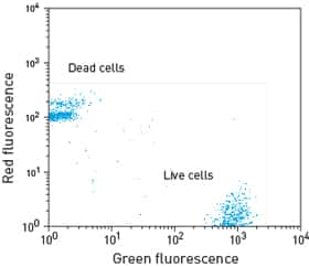 flow cytometry scatter plot showing two distinct populations: dead cells (red fluorescent) and live cells (green fluorescent)