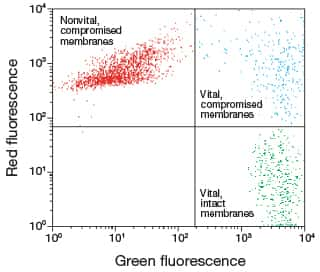 flow cytometry analysis of a yeast sample