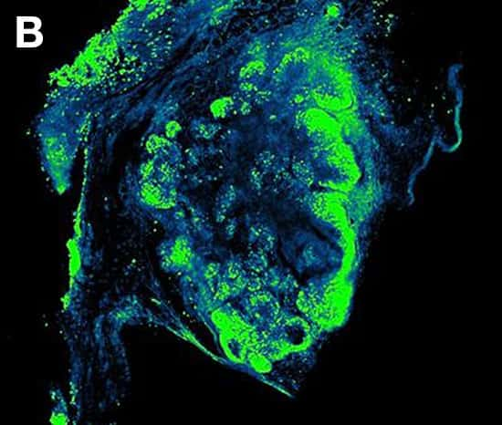 Clearing Reagents for Imaging 3D Cell Culture and Tissue