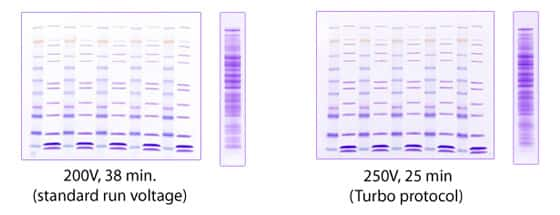 photo of stained gels showing results when using Turbo protocol