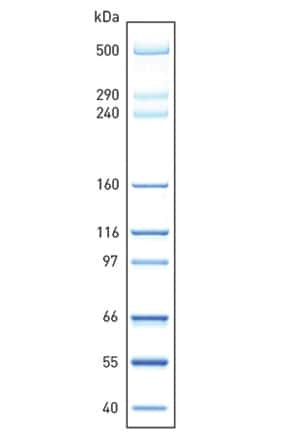 HiMark Unstained Protein Standard