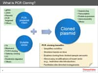 The power of PCR cloning