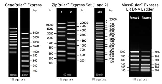 multi-panel gel images of Express DNA ladders