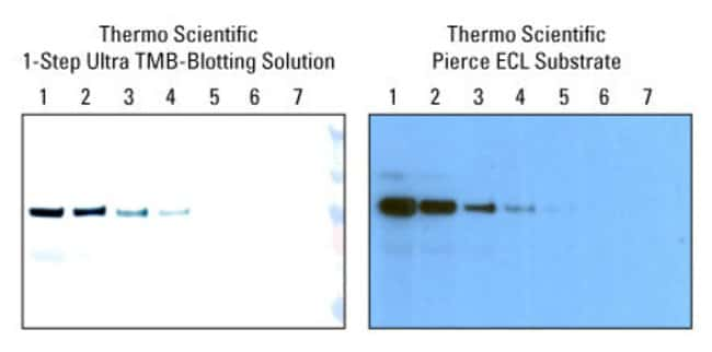 Far Western Blot Analysis Thermo Fisher Scientific Us