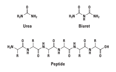 Overview of Protein Assays Methods   Thermo Fisher