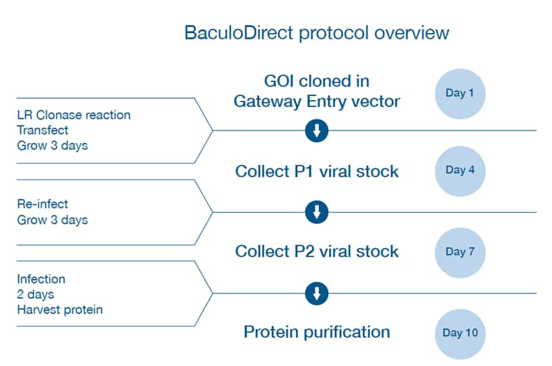 Insect Cell–Based Protein Expression — Protein Expression