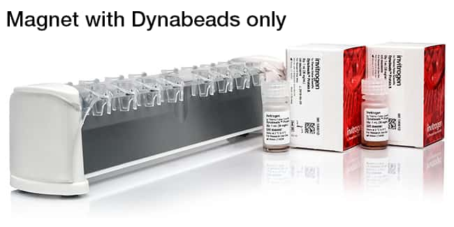 Magnet with Dynabeads only