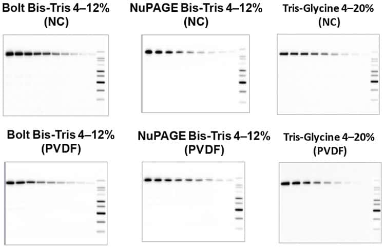 Efficient transfer of iBlot Gel transfer device across protein gel chemistries