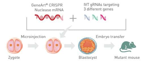 diagram showing potential genome editing application in transgenic models
