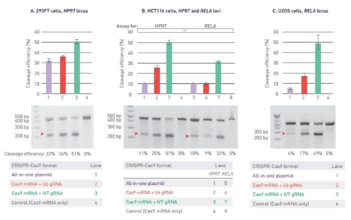 cleavage efficiency data for CRISPR Nuclease mRNA system