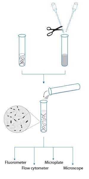 LIVE/DEAD <i>Bac</i>Light Bacterial Viability Kit