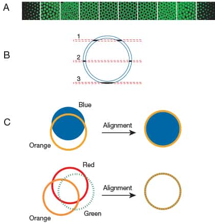Three panel figure describing confocal laser-scanning microscope optical cross-sectioning and alignment with FocalCheck™ microspheres
