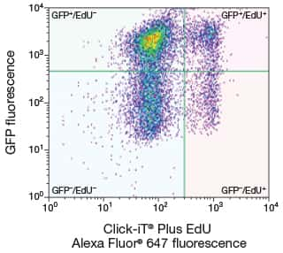 Dual-parameter scatter plot of fluorescence of cells labeled with the Click-iT® Plus EdU Alexa Fluor® 647 Flow Cytometry Assay Kit and GFP