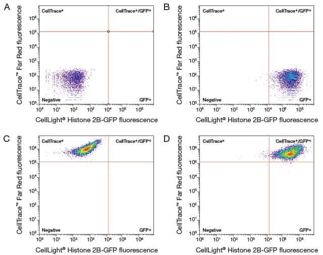 Four panel figure illustrating live-cell multiplexing of CellTrace™ Far Red dye and CellLight® Histone 2B-GFP