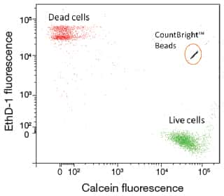 Scatter plot of a viability experiment showing counting cells with CountBright™ beads