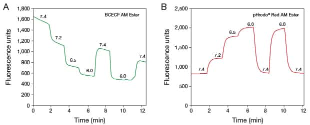 Two panel figure illustrating real-time intracellular pH measurements of NIH/3T3 cells loaded with BCECF AM and pHrodo® Red AM intracellular pH indicators