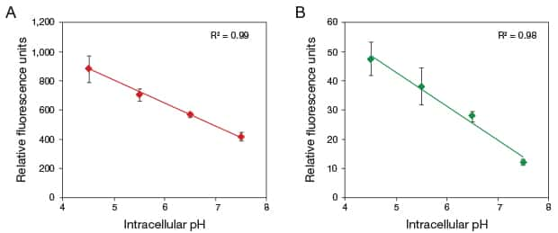 Two panel figure of standard curves showing the linear relationship between intracellular pH and relative fluorescence in U2OS cells incubated with pHrodo Red and pHrodo Green AM intracellular pH indicators