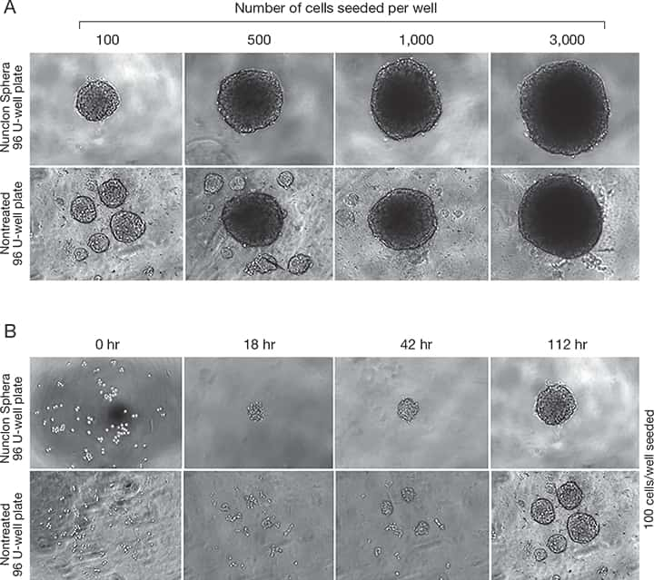 Formation of Uniform and Reproducible 3D Cancer Spheroids ...