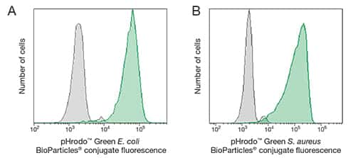 pHrodo™ Green BioParticles® Phagocytosis Kits