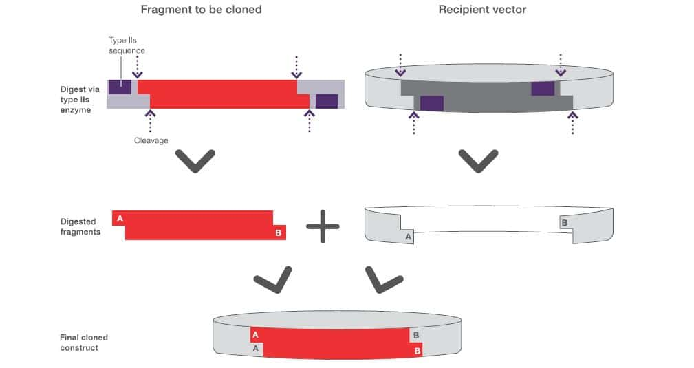 Type IIS Restriction Enzymes