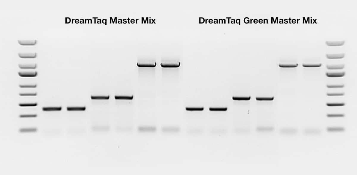 Dreamtaq Dna Polymerases Thermo Fisher Scientific Us