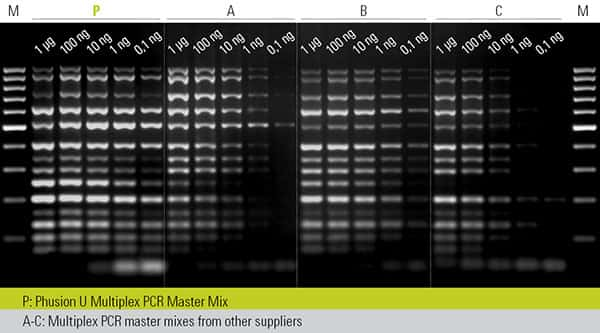 gel image showing amplification of 14 targets (70–1000 bp) from decreasing amounts of  human genomic DNA