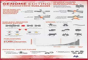 Genome Editing with engineered nucleases poster