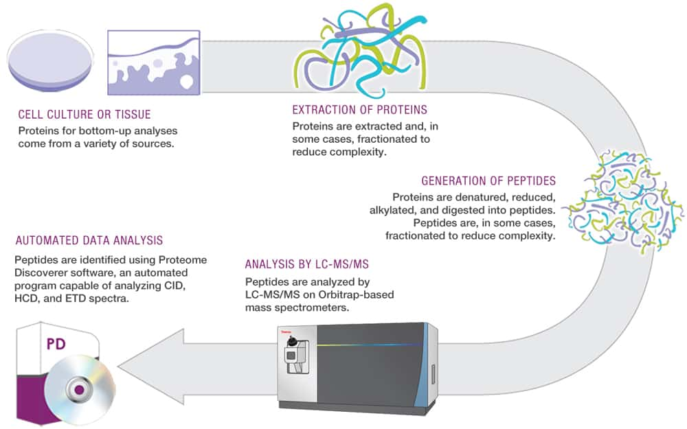 Proteomics and Protein Mass Spectrometry | Thermo Fisher