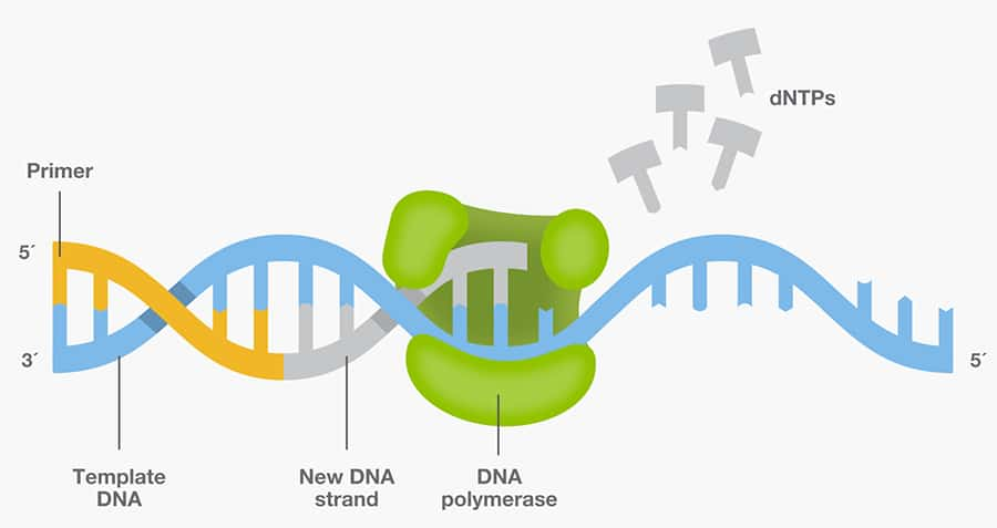 to overcome such shortcomings better performing dna polymerases are continually being developed to harness the power of pcr across a variety of biological
