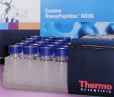 HeavyPeptide AQUA Custom Peptide Synthesis Service