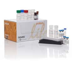 Novex Assay Kits for Multiplex Luminex Assays
