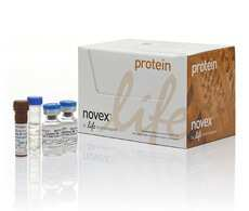 Novex kits for singleplex magnetic Luminex assays