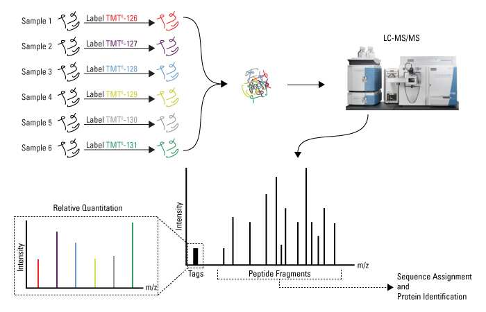 isotope coded affinity tag biology essay Affinity tag protein purification  biology department, university of massachusetts  isotope-coded affinity tags (icat) represent an important new tool for the .