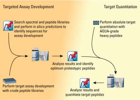 Targeted Assay Development-450px