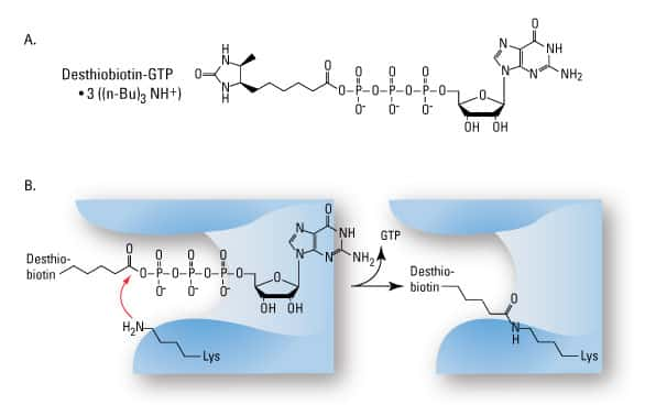 ActiveSite-Rxn-GTP-Fig1