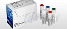 BigDye® Direct Cycle Sequencing Kit