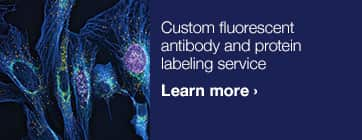 Custom fluorescent antibody and protein labeling service