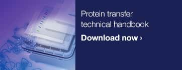 Protein transfer technical handbook