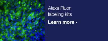 Up to 30% off Alexa Fluor® secondary antibodies